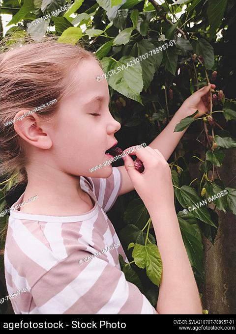Girl tasting fresh ripe mulberry from a tree in the garden
