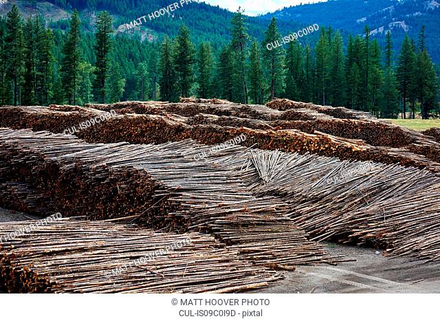 Timber yard, Midway, Canada