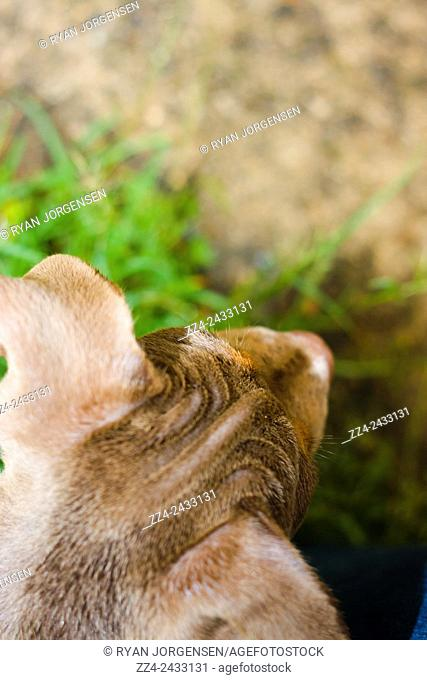 Top-down image on the head of a curious puppy dog exploring outdoors. Copyspace adventure