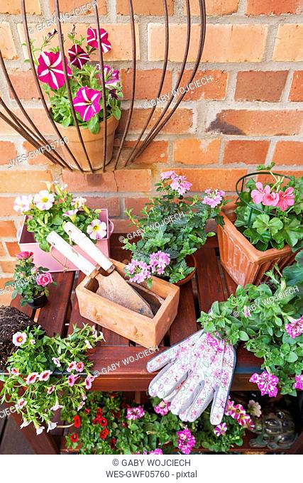 Various potted spring and summer flowers, gardening tools and gloves