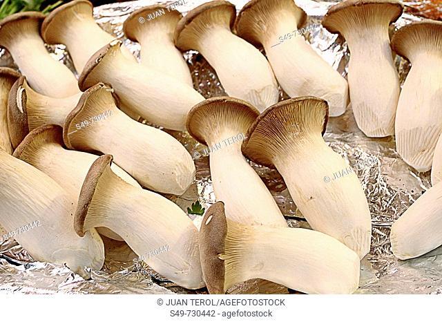 Mushrooms for sale at market, Valencia. Comunidad Valenciana, Spain