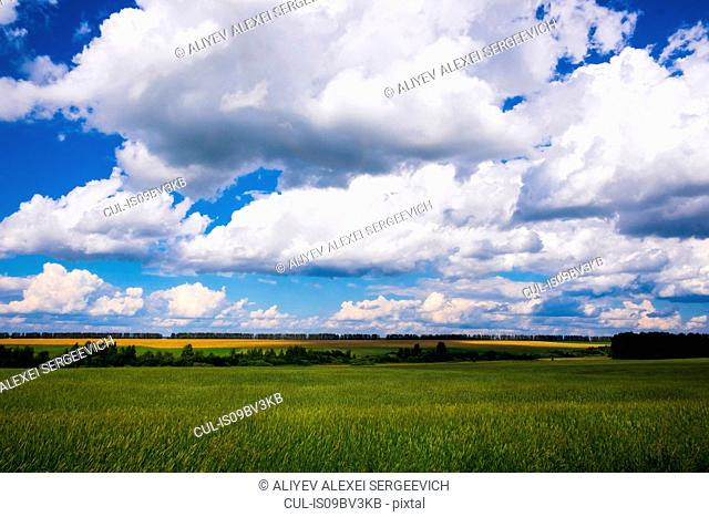 Landscape with green wheat field