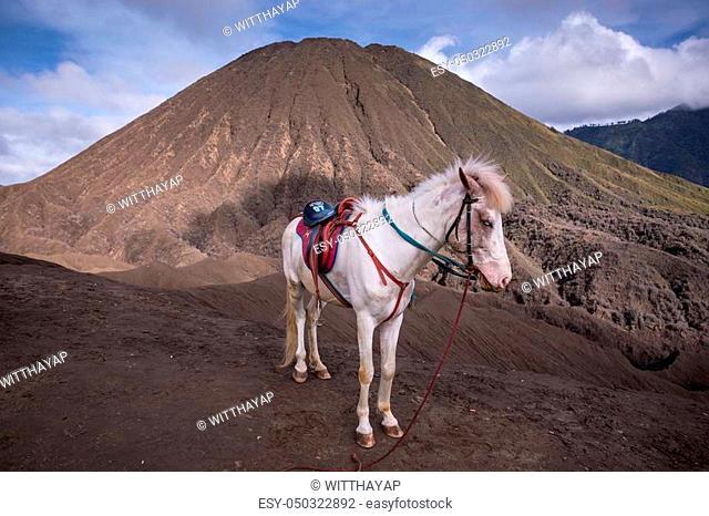 Mount Bromo volcano during sunrise in East Java, Indonesia