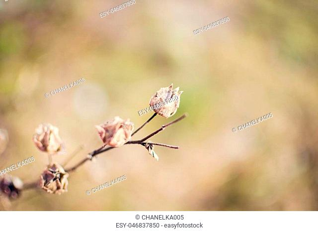 Dry flower background in pastel tones, closeup with soft focus. Beautiful nature wallpaper for desktop for women. Blurred background. Selective focus
