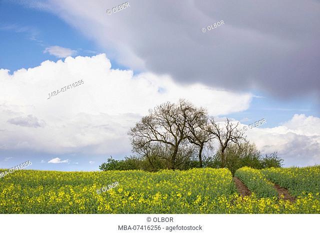 Germany, Mecklenburg-Vorpommern, landscape with rape field