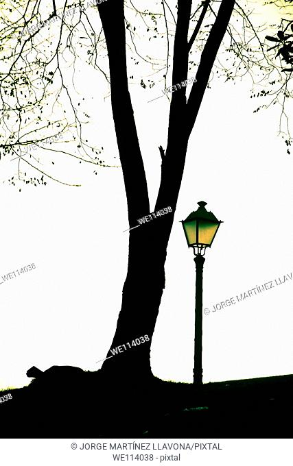 Streetlight and tree in a park