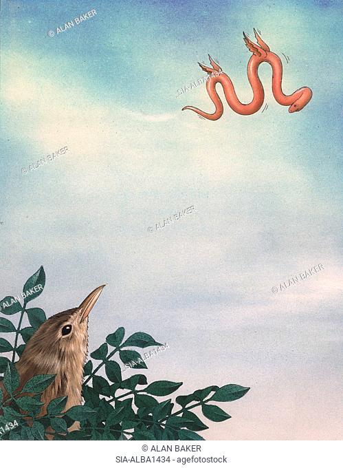 Bird looking at worm flying in sky