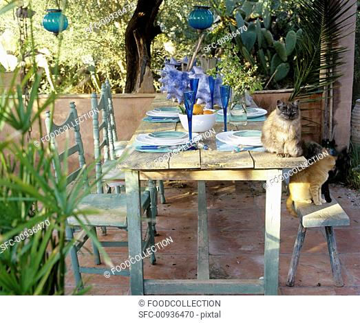 Laid table and cats on a terrace