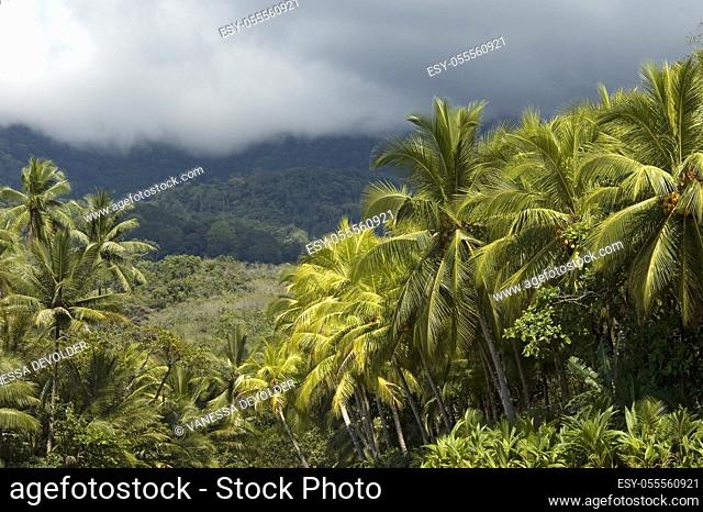 Landscape with tropical trees near Playa Ventanas, South Costa Rica