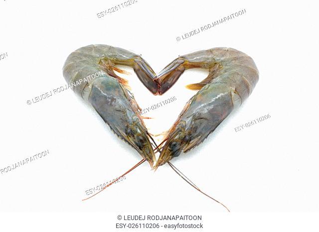 Raw / fresh shrimp / prawn isolated on white background