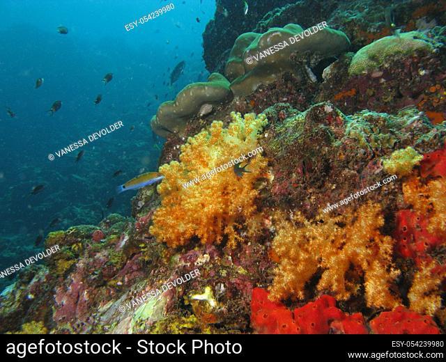 Ko Ha, a coral reef underwater, located in the Andaman Sea near Ko Lanta, Thailand, Azia