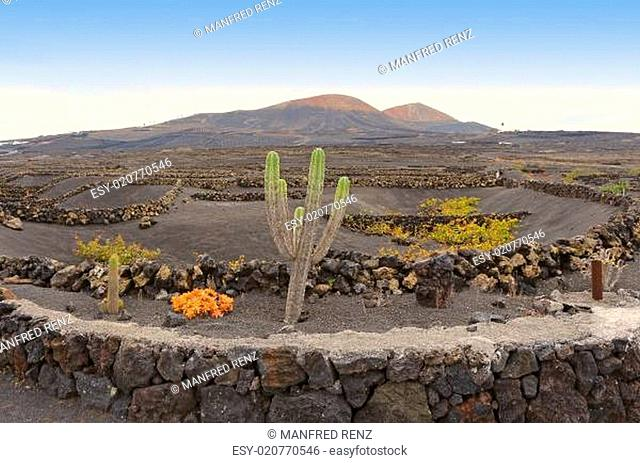La Geria – Lanzarote