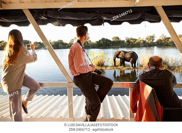tourism in sunset cruise zambezi river. victoria falls