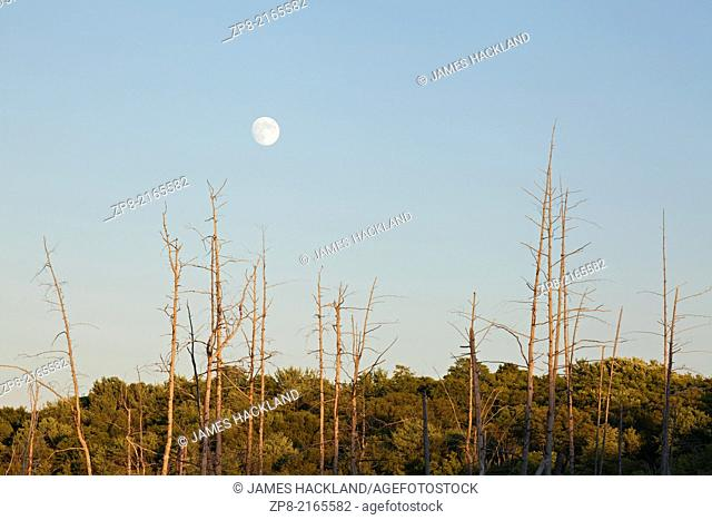 A full moon rising at sunset over a marsh near Bala in Muskoka, Ontario, Canada
