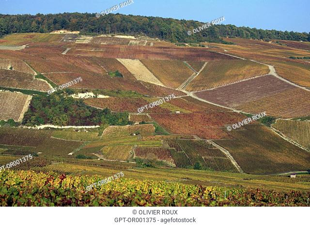 CHAMPAGNE VINEYARDS IN AUTUMN, MARNE (51), CHAMPAGNE-ARDENNE, FRANCE