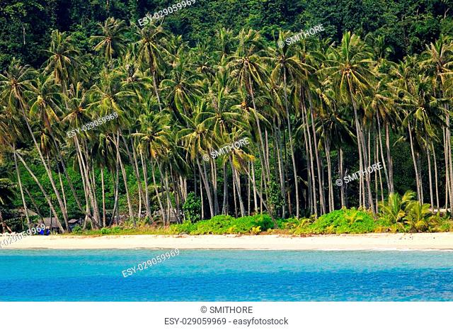 Tropical sea shore with coconut tree forest at the Ao Phrao beach in Ko Kood island, Thailand