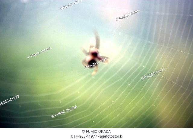 A spider spinning its web