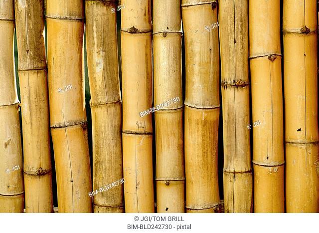 Close up of bamboo stalks