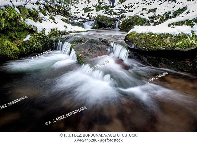 Arce Forest, Arce Valley, Navarre, Spain