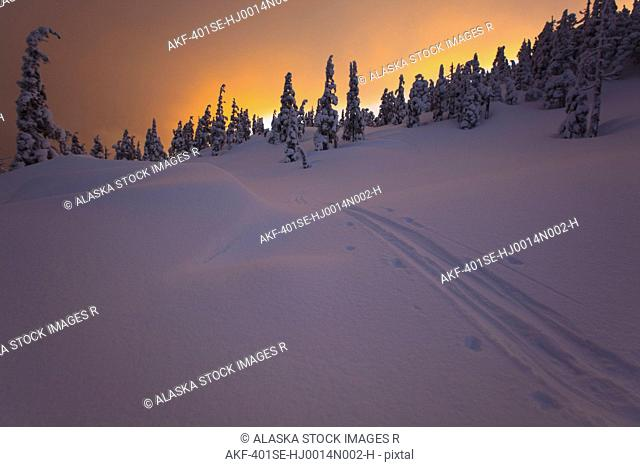 Ski tracks fade off into a snow covered stand of trees at sunset during winter on Wrangell Island in the Tongass National Forest, Southeast Alaska
