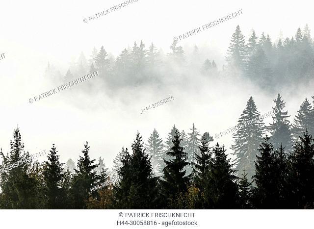 Wood in the fog, Zug Switzerland