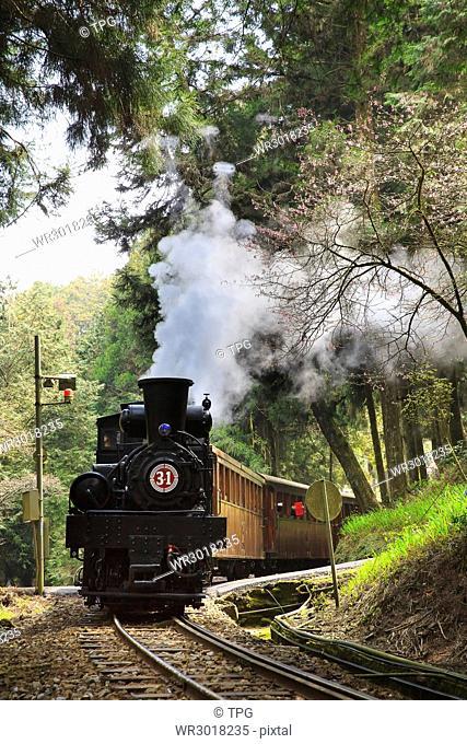 Ali,cherry blossom,steam train
