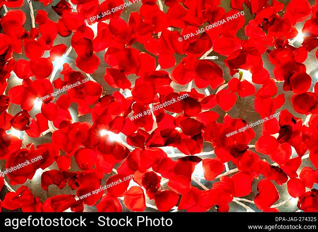 Red Rose Petals floating in water, Wedding Hall decoration, India, Asia