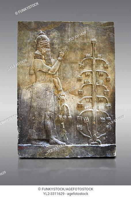 Stone relief sculptured panel of a Genie with poppy seed heads next ro the tree of life. Inv AO 19869 from Dur Sharrukin the palace of Assyrian king Sargon II...