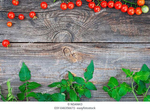 Grey wooden background with ripe red cherry tomatoes and green branches, the empty space in the middle