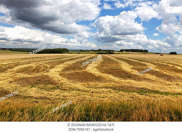 Field of wheat after harvesting with a combine