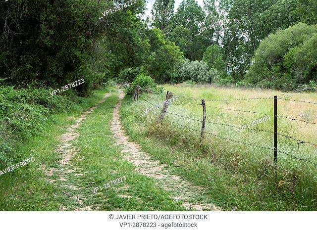 Path and vegetation along the trail PRC-AV11. River Corneja and Hocino. Valley of the Corneja. Avila. Castilla y León. Spain