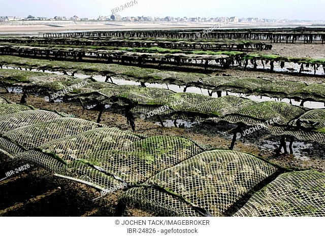 FRA, France, Normandy, Blainville : Oyster fields.oyster farm. The oysters grow here for more than 3 years in the tidal area
