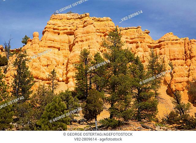 Cabin Hollow ridge in Red Canyon, Dixie National Forest, Highway 12 Scenic Byway, Utah