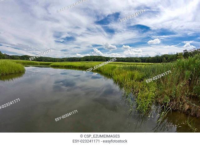 Swamp Marsh Summer