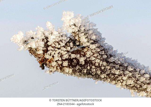 Ice crystals on a tree bud on Magdalenaberg Hill in Bad Schallerbach. Austria