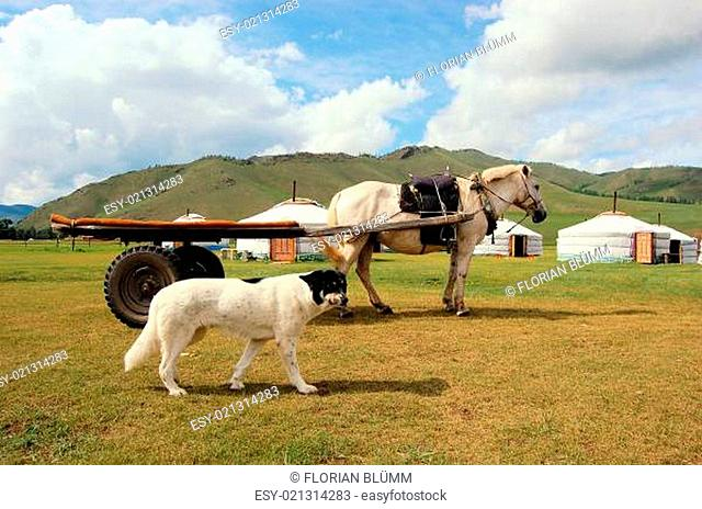 Dog and Horse in front of Mongolian yurts