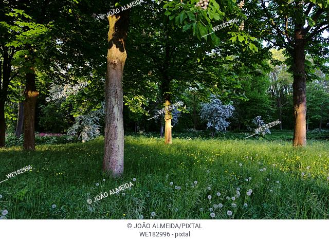 Spring blooming in a dutch garden