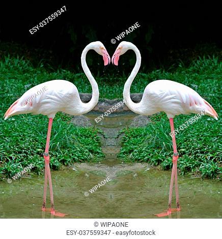 2 Flamingo in heart shape