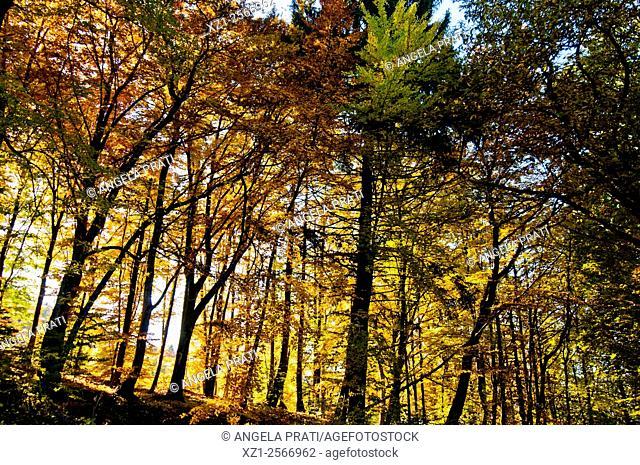 Italy, Trentino region, colors of autumn