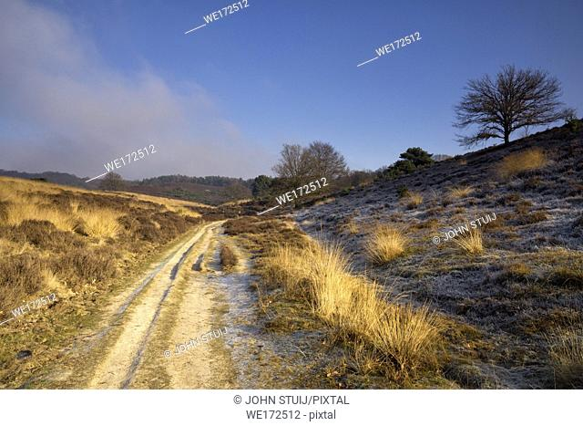 Sandy road near the Posbank in the Dutch National Park Veluwezoom near the village Rheden