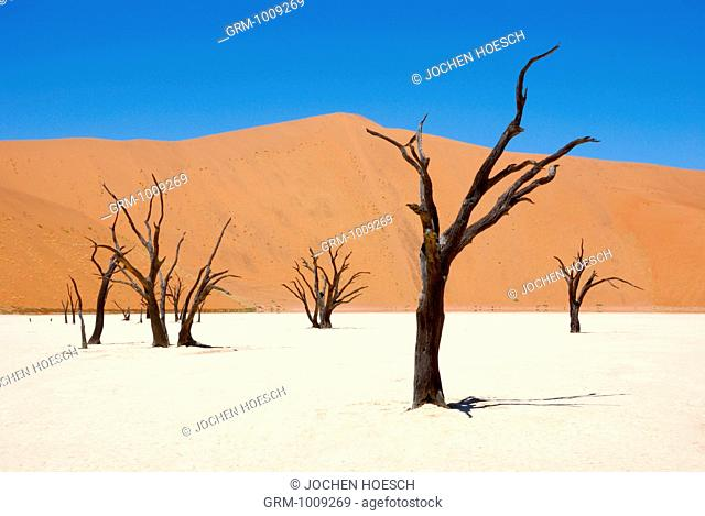 Trees in the Sossusvlei, Namibia