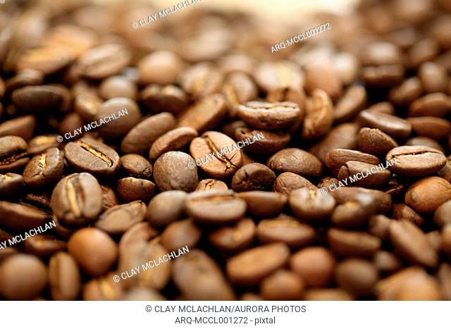 Full frame of brown roasted coffee beans, Oakland, California, USA