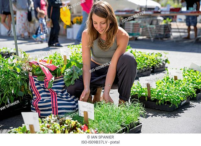 Woman at fruit and vegetable stall selecting herb plants