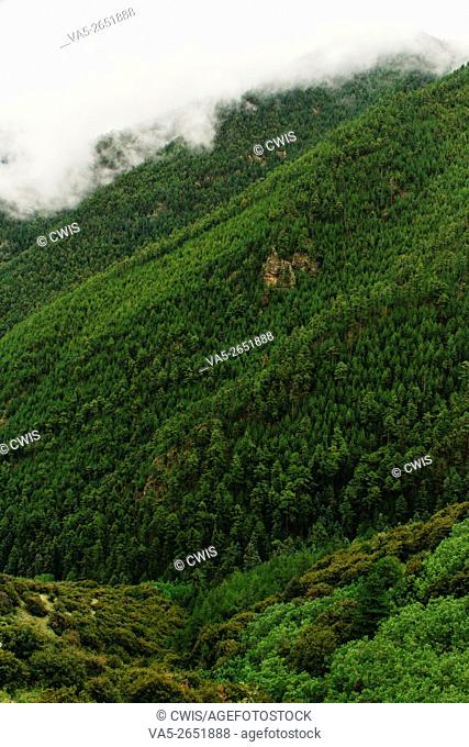 Beautiful landscape in Tibet, the forest