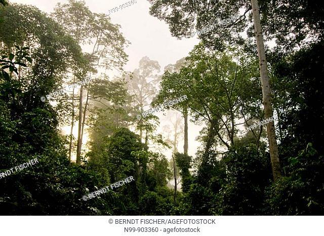 Danum Valley rainforest Sabah Borneo Malaysia