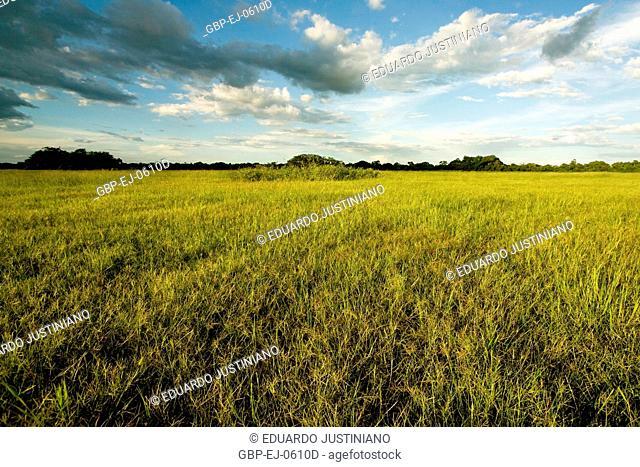 Field with Grass-delicate, Corumbá, Mato Grosso do Sul, Brazil