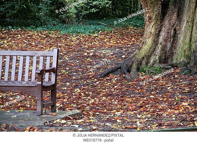 Holland Park, London. England, UK