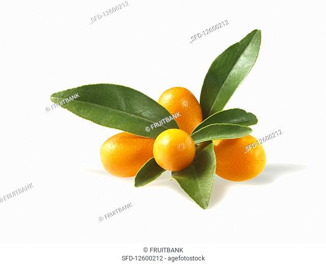 Kumquats with leaves