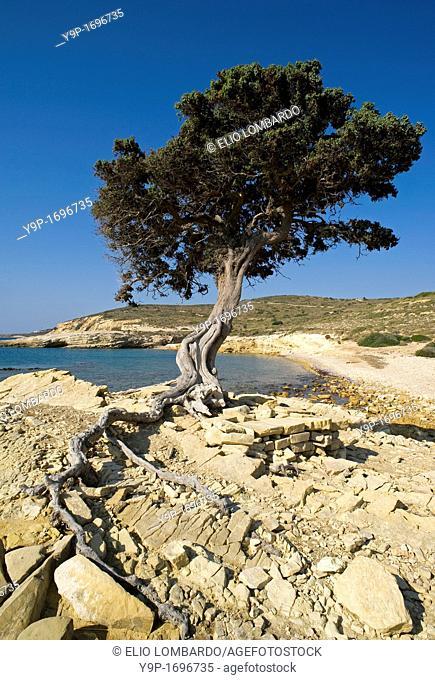 Monodendri beach, Lipsi Island, Dodecanese, Greece