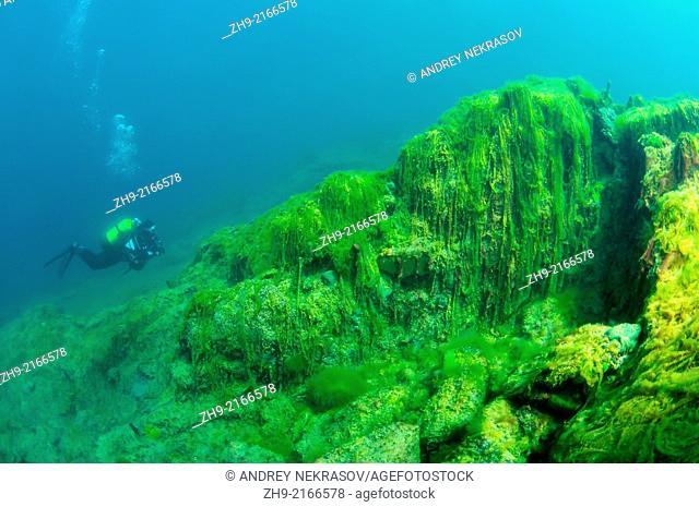green algae (Chlorophyta) Lake Baikal, Siberia, Russian Federation, Eurasia